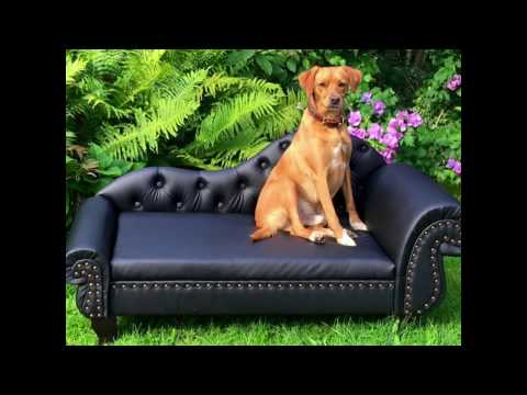 Luxus Hundesofa Welt IV in der Doéma Boutique