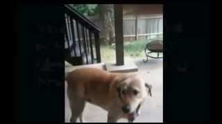 Protandim Dog and Horse Compilation