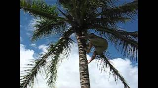 preview picture of video 'How to Climb a Coconut Tree- Tongan Style'