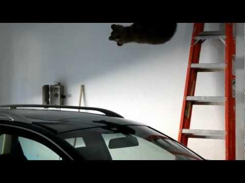 Cucciolo d'orso rimane intrappolato in un garage