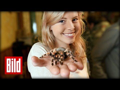 Verlieren Sie Ihre Angst vor Spinnen - Arachnophobie auf Wiedersehen