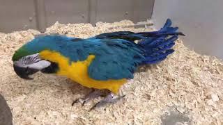Beak Week! - Parrots!