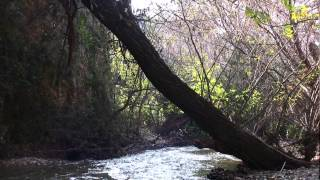 preview picture of video 'מפל התנור נחל עיון , Tanur waterfall iyon stream nature reserve Israel   HD'