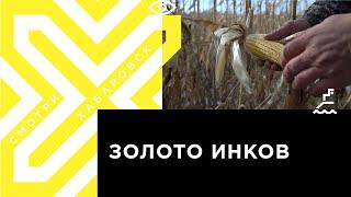 Уборочная кампания в Хабаровском крае завершена на 85 %