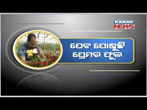 """Role Model-Rose Boy"", Rose Farming At Bamra, Sambalpur"