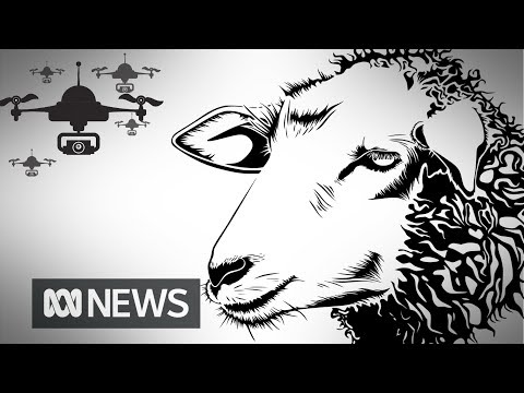 'Lambulance' drones used to check animal health during lambing season | ABC News