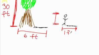 Shadow Tree Problems Geometry