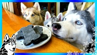 DIY DENTAL DOG TREATS   DIY Dog Treats   Snow Dogs Snacks 64   Dental Chews