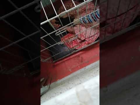 Лечим дикого бездомного кота от подкожного клеща