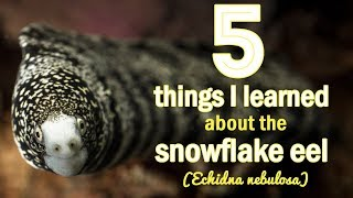 5 Things I Learned About Snowflake Eels