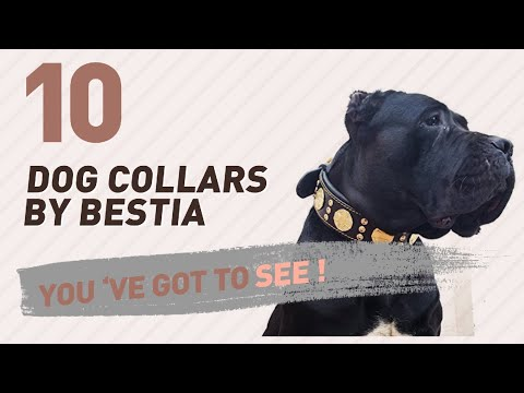 Dog Collars By Bestia // Top 10 Most Popular
