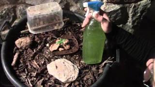 Abono E Insecticida Natural Para Marihuana Y Otras Plantas.