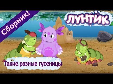 Лунтик 🌼 Такие разные гусеницы🌼 Сборник мультфильмов 2017