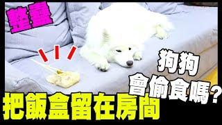 把飯盒留在房間,狗狗會偷吃嗎?