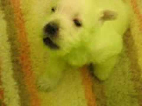 Boomer as a pup. He was about 5 weeks old?