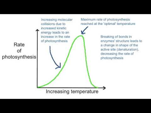 factors that affect the rate of photosynthesis
