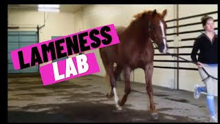Lameness Lab #1: Is this horse lame?