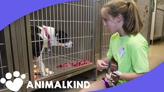 10-year-old strikes a chord with shelter animals