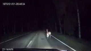 Олени на дороге