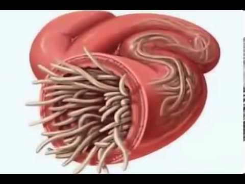 Giardia fecal antigen analysis