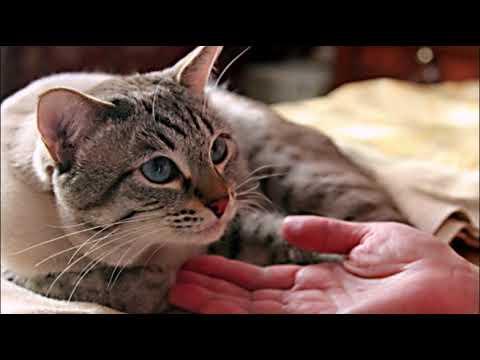 КАСТРАЦИЯ КОТА  Плюсы и минусы  NEUTERING A CAT