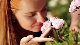HDZ 14 2017 Špeciál: Ruže