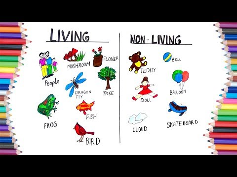 HOW TO DRAW LIVING AND NON LIVING FOR KIDS
