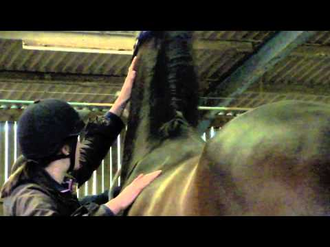 Equine Massage for Horse Owners Part 1 of 3