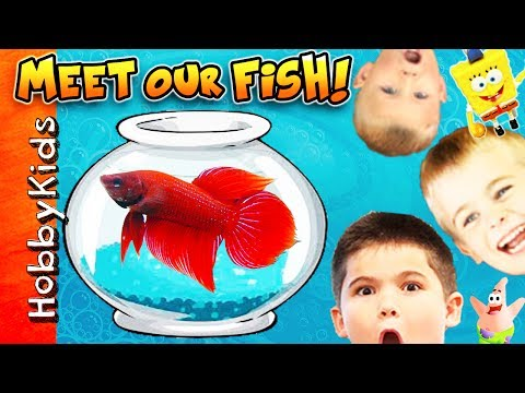 We Get New Fish and Tanks + Surprise Eggs with HobbyKids