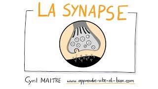 Vignette de NEUROSCIENCES EN DESSINS : La synapse