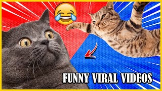 🤣 Funny Animal Videos 🐶  Try Not to Laugh 😹