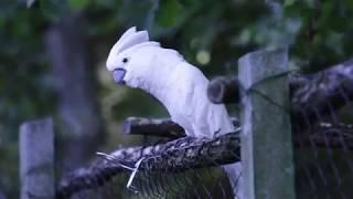 #yhприколы2019 Приколы про животных. Разборки попугая. Смешные животные. Funny Cats And Parrots.