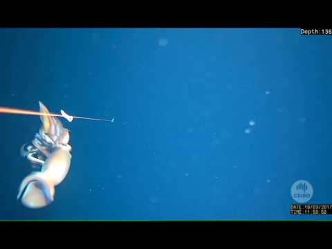 When squid attack!