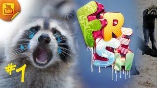 Fresh funny video compilation 2016 COUB #1  Лучшие Приколы видео 2016 COUB #1