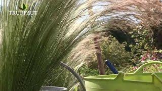 Comment planter la graminée Stipa : cheveux d'ange ? - Jardinerie Truffaut TV