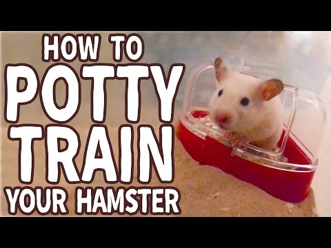 🐹 How to Potty Train Your Hamster 🐹