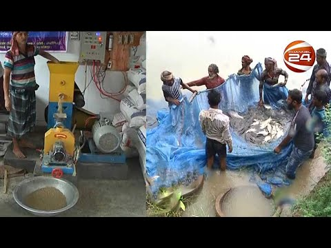 নিজেদের তৈরি খাদ্যে মাছের উৎপাদনে সফল ফরিদপুরের মৎস্য চাষিরা