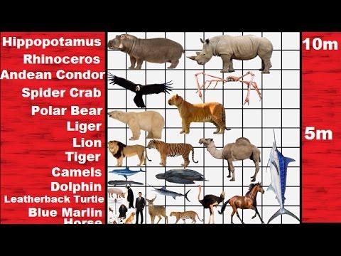 Listahan ng mga gamot laban sa parasites sa katawan ng tao