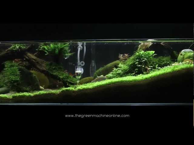 'Tributary' aquascape by James Findley