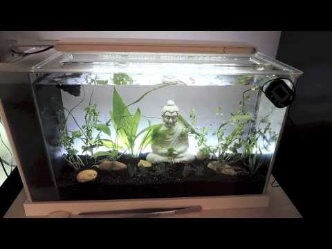 Fluval Spec: 5 Gallon Aquarium Review