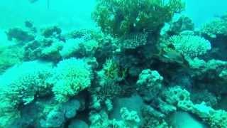 preview picture of video 'PADI SCUBA Diving Trip:  Day 1 Aqaba - Jordan'