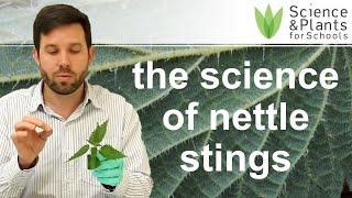 Biology practical demo - How do nettles sting?