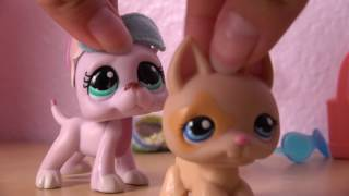 ❀ LPS: Behind the Scenes (Night Owl)