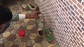 Cobra caught inside shoes..