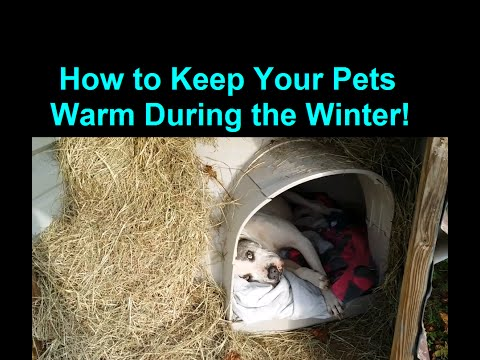 How To Keep A Dog Warm During Winter Cold Weather - Warm Dog House