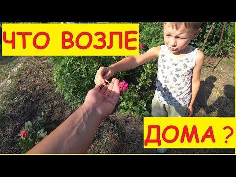 ОБЗОР УЧАСТКА ВОЗЛЕ ДОМА / Что растёт рядом с домом / Семья в деревне