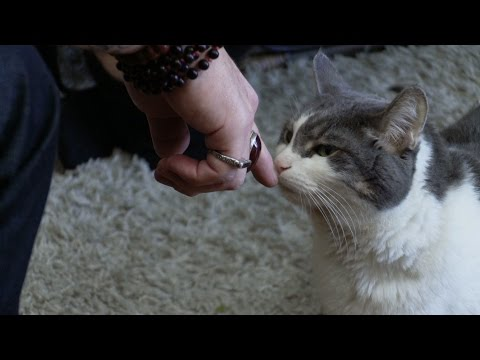 Storm the Cat's Miraculous 180 | My Cat From Hell