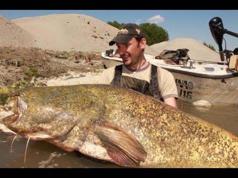 Pesca di carpa di stagno
