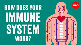 Emma Bryce & Addison Anderson - How Does Your Immune System Work?