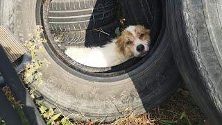 Mutilated dog, abandoned like trash, finally finds love